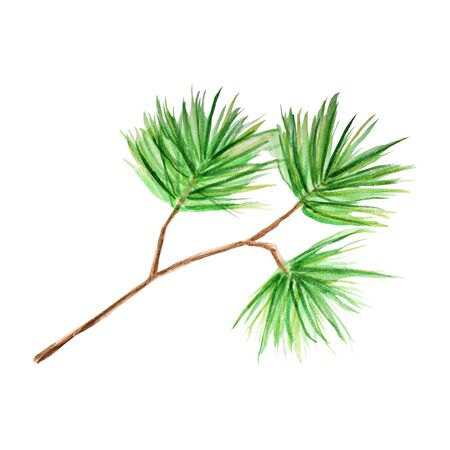 Watercolor Christmas pine tree branches. Hand painted texture with fir needle natural elements isolated on white background. Illustration concept for invitations, Christmas greeting cards