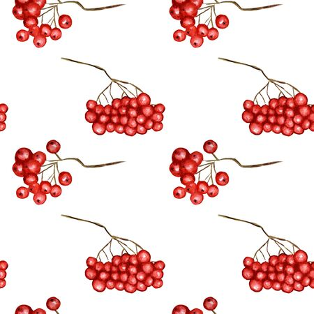Seamless pattern Red rowan Autumn berries seasonal, nature berry, autumnal botanical on a white background.  autumn element hand drawn illustration for scrapbooking, paper, fabric, texture 写真素材