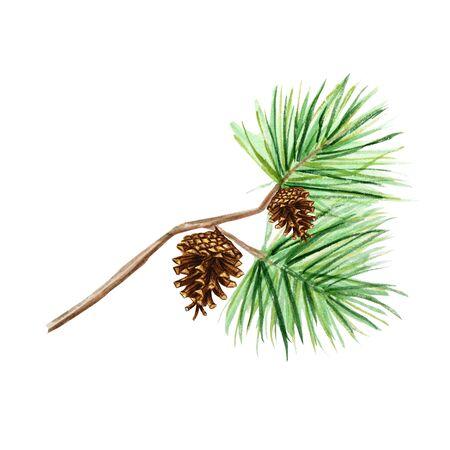 Sammlung von Tannenzweigen und Zapfen, Nadeln auf weißem Hintergrund, Aquarellhandzeichnung, dekorative botanische Illustration für Design, Weihnachtskartenkonzept