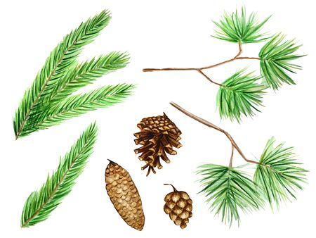 set Collection of pine branches and cones, needles on white background, watercolor hand draw, decorative botanical illustration for design, Christmas card concept