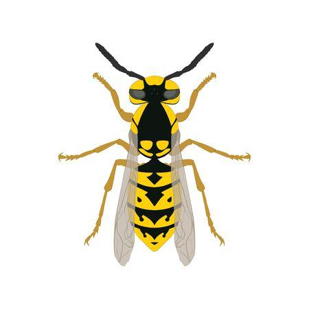 Wasp. Wasp top view. Иллюстрация