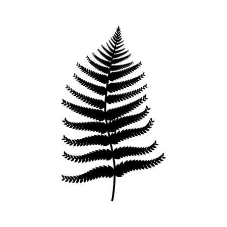 Fern leaf Standard-Bild