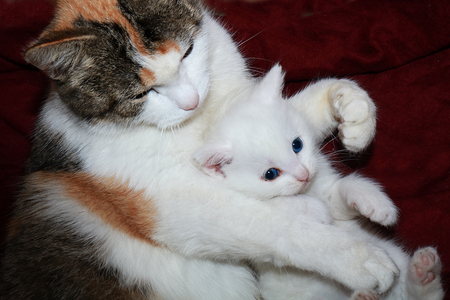 Mom cat hugs a little kitten, care and love in nature. The atmosphere of warmth and comfort in the house, the rescue of homeless animals Foto de archivo