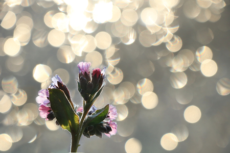 Spring blurred background with primroses, abstract first flowers on bokeh background at sunset.