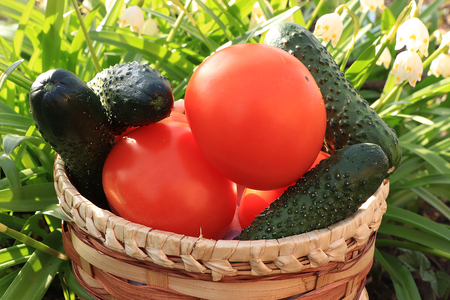 Tomatoes and cucumbers in a decorative basket on a light background, tasty and healthy food, diet food, harvesting in the village 免版税图像
