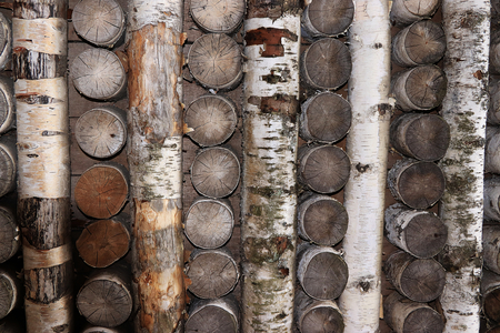 The wall of birch trunks in a wooden frame, the construction of houses in the Russian village. A detailed view of the wooden wall, a warm house for the winter.