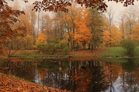 September autumn park in Russia, lake with red leaves and reflection in heavy fog. Beautiful autumn landscape in the park, seasons., A journey through beautiful, Russian, autumn forests