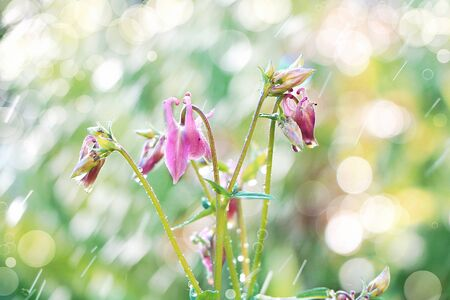 Abstract floral spring defocused background in pastel colors with soft focus and bokeh and rain. Banner for the screen, a beautiful bright greeting card or invitation, seasonal Easter concept Foto de archivo - 141426945