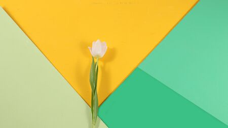 Abstract spring floral background, banner, minimal holiday concept, geometry. Greeting card for mother's day, happy birthday, wedding, Foto de archivo