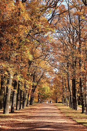 October autumn park in Russia, an oak alley with red leaves. Beautiful bright landscape in the park, seasons, golden autumn season, background, Tsarskoe Selo, Leningrad region, travel Фото со стока