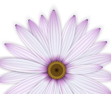 Crop of purple daisy