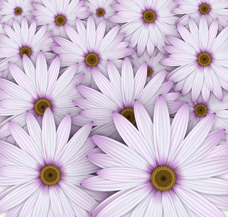 Purple daisy flowers field background