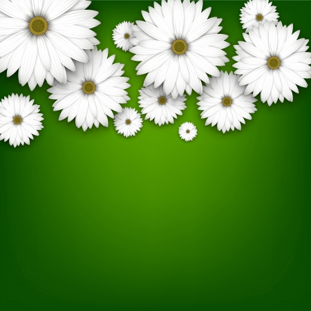 White daisy flowers field background. Detailed vector illustration. Eps10.