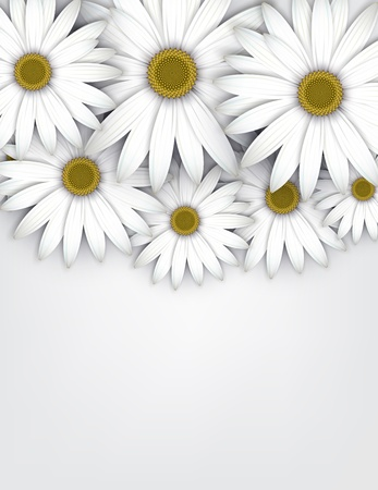 white daisy: White daisy flowers field background. Detailed vector illustration. Eps10.