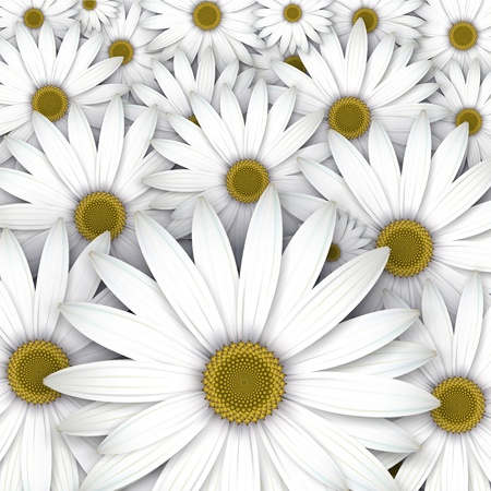 White daisy flowers field background. Illustration
