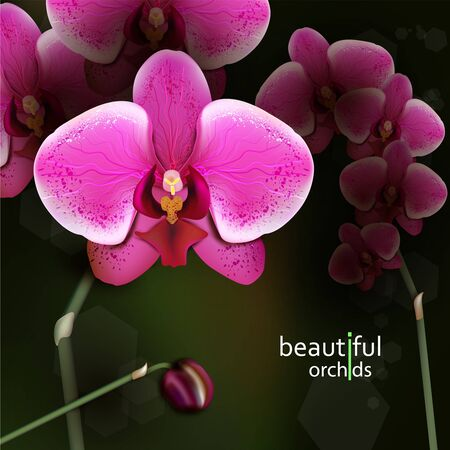 Illustration of purple orchid flower. Detailed vector background. Eps10.