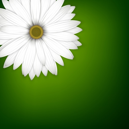 White daisy flower background. Detailed vector illustration. Eps10.  Illustration