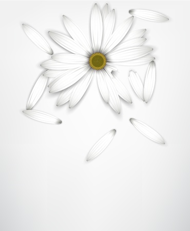 White daisy flower background with cut short petals. Detailed  illustration. Illustration