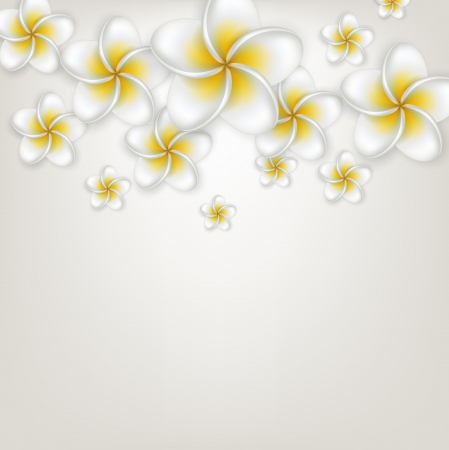Composition of frangipani (Plumeria) flowers. Detailed background.  Illustration