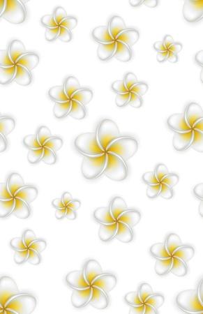 Seamless pattern of frangipani (Plumeria) flowers. Detailed background.  Illustration