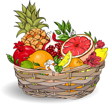 Exotic fruits in wicker basket isolated on white background. Vector illustration.