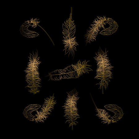 Gold carnival feathers sketches isolated on black background. Vector illustration.