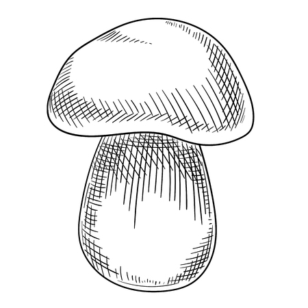 Black hand-drawn cep mushroom sketch isolated on white background. Vector paper illustration.