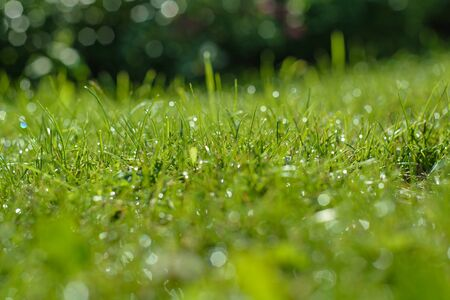 acute angle: Green grass background with dew drops on. Soft focus. Stock Photo
