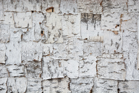 Texture. Roof slope from pieces of birch bark. photo