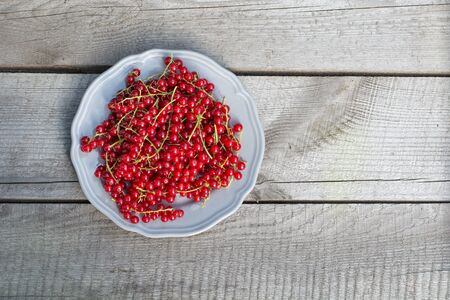 currant: red currant on plate