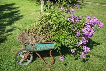 carretilla: Carretilla de jardín llena de tierra en una granja.