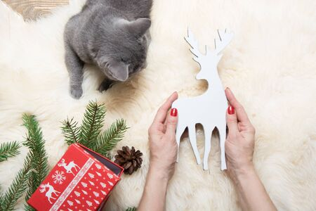 Female hand holding christmas toy deer. Xmas holiday concept. Winter. View from above. British cat is looking at the toy.