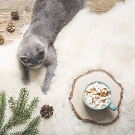 Christmas holiday card. Cup of coffee, british cat. Rest at home. Top view. Copy space. Matte image. Stock Photo
