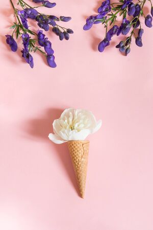 White peony flower in waffle cone and ultra violet aconitum on pink background. Summer and spring concept.