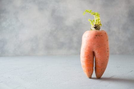 Ugly one organic carrot . Space for text. Concept organic natural vegetables.