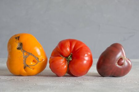 Oddly shaped organic colorful tomatoes. Concept of organic vegetables. Stok Fotoğraf