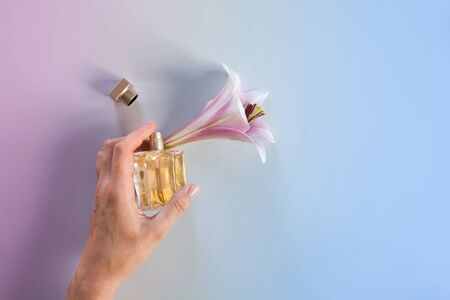 Luxury bottle of perfume in female hand with fresh lily flowers on blue background.