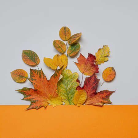 Fall leaves on orange and grey background. Concept autumn sale. Square image. Stok Fotoğraf