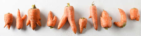 Banner of abnormal ugly organic carrots on white. Concept natural vegetables.