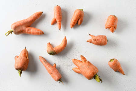 Abnormal ugly organic carrots on white background. View from above.