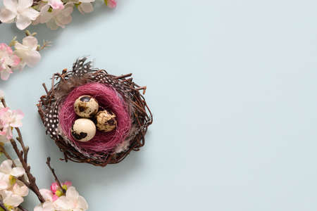 Easter composition with quail eggs in nest and spring blooming flowers on blue. Copy space. View from above.