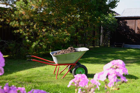 Full wheelbarrow with humus on green lawn in garden. Seasonal work and fertilization. Outdoors.