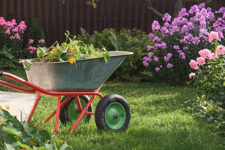 Wheelbarrow full of humus and compost on yard.