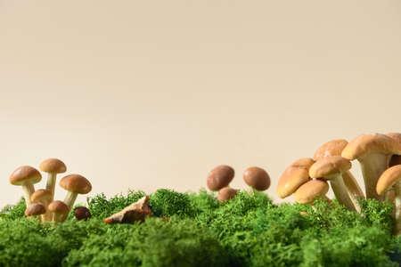 Honey mushrooms in forest moss. Concept pick mushrooms Standard-Bild