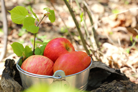 Food. Harvesting. A bucket of fruit in a sunny garden on a stump, two red ripe juicy apples and a pear.
