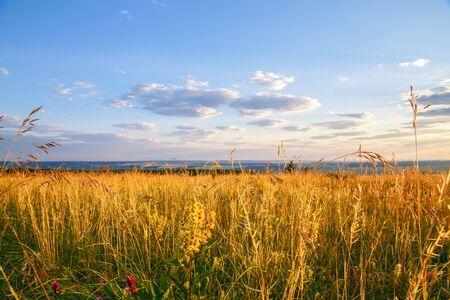 Naturaleza en Rusia en la región de Saratov. Paisaje con una pradera de color amarillo dorado con el telón de fondo del cielo azul de la mañana con nubes Foto de archivo