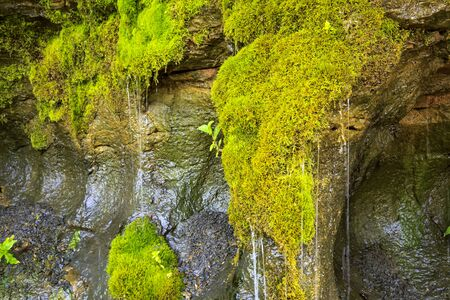 Ecology and nature. The source of clean drinking spring water among stone rocks and moist fresh green moss. Spring