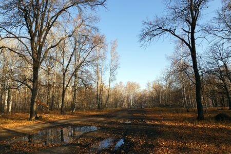 Autumn landscape, nature, walk in the park outdoors. Dirty road in the woods among trees and fallen yellow and golden foliage in fine weather in October and November against a blue sky 写真素材