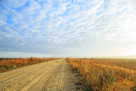 Autumn rural landscape. Fog at sunrise in a yellow golden field in the sunshine on a warm October day early in the morning against a cloudy blue sky and dirt road 写真素材