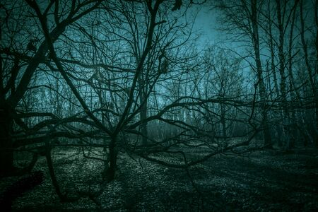 Horror dense ghostly dark forest. Scary creepy night landscape with clumsy tree branches against the backdrop of the moonlight, mystical glow and strange paranormal shadows in the dusk of darkness